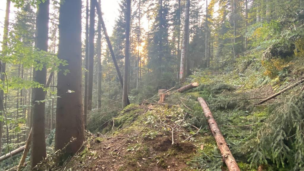 13-jähriger Schnupperstift unter Baumstamm begraben