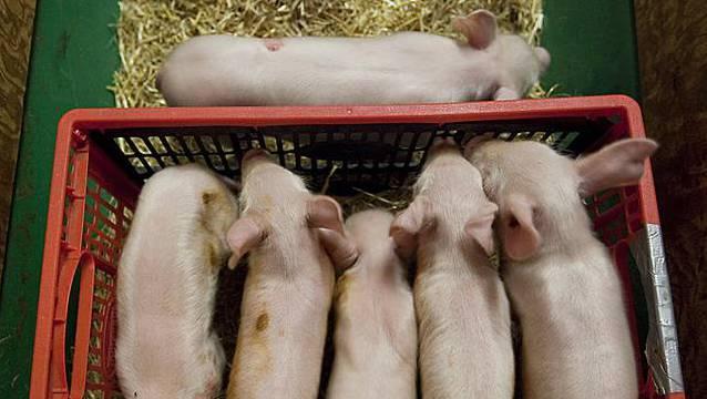 Verein gegen Tierfabriken erhält nach 16 Jahren recht (Symbolbild)