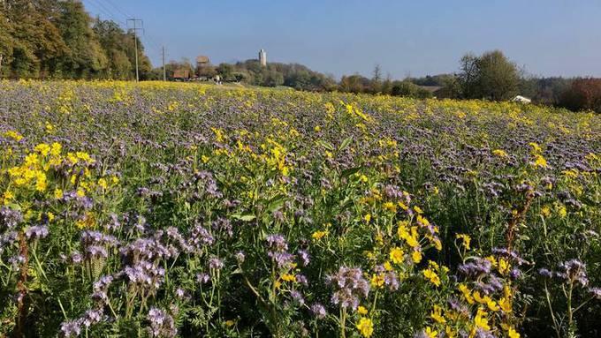 Selberpflück-Blumenfelder, bei denen man seinen Strauss direkt vom Feld zusammenstellt und das Geld in ein Kässeli einzahlt: verboten.