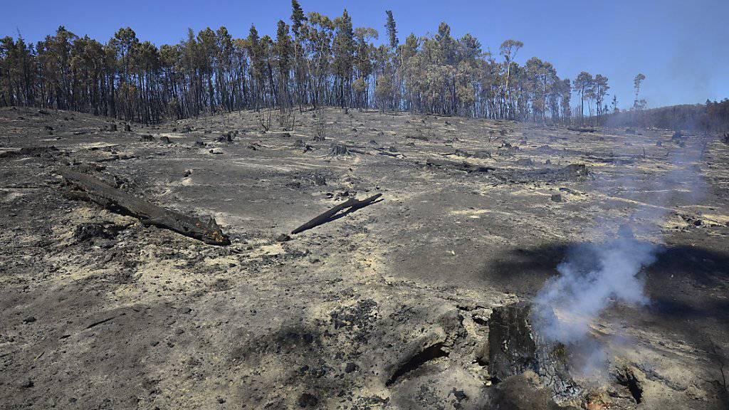 Mit Hitze und Dürre steigt das Risiko für Buschfeuer und Waldbrände, wie sie Anfang des Jahres bei Adelaide wüteten. (Archivbild)