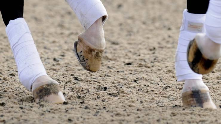 Das Leitungsteam Dressur des Schweizerischen Verbands für Pferdesport hat die Selektion der Dressur-Reiter bekanntgegeben.
