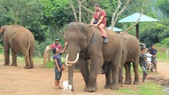 Onlineredaktor Dominic Kobelt reitet auf Elefant Dodo.