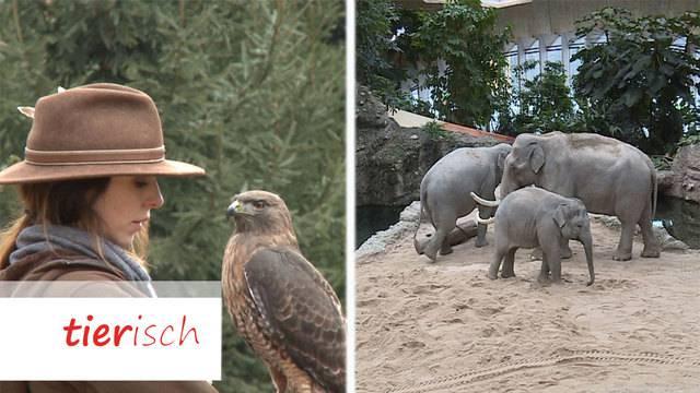 Falknerin / Zoo Zürich – früher und heute