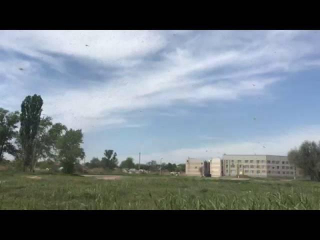 Riesiger Mückenschwarm  in Taganrog