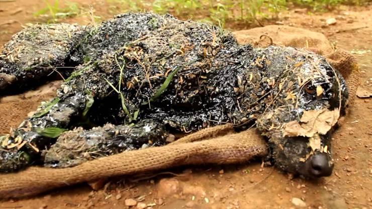 Der geteerte Hund von Indien konnte sich nicht mehr bewegen, bis er schliesslich mit Olivenöl wieder aufgepäppelt wurde.