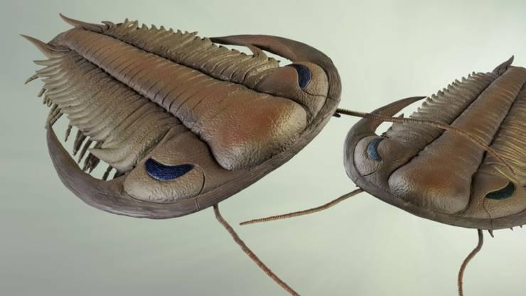 An einem über 400 Millionen Jahre alten Trilobiten-Fossil (Bild: grafisches Modell) hat eine Forscherin Facettenaugen entdeckt. (Symbolbild)