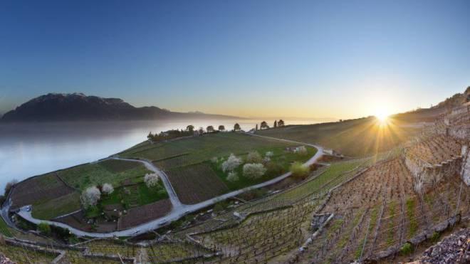 Durch die Weinberge des Lavaux, mit dem Blick auf Genfersee und Alpen: Die Wander- und Genusssaison im Waadtland geht los. Foto: Carlos Wunderlin