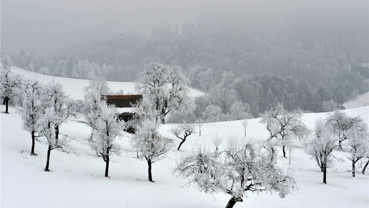 Die Obstbäume im Baselbiet versanken im Januar im kalten Weiss. Foto: Franz Schweizer