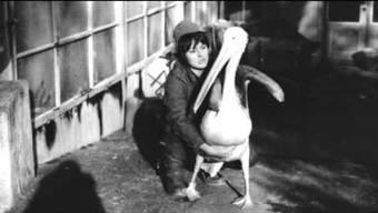 Pelikan Abraham war ein ganz besonderer Pelikan im Zoo Basel. Er setzte sich nicht nur neben Besucherinnen auf die Parkbank, sondern trat sogar vor Publikum im Zirkus Knie auf. Die langjährige Tierpflegerin Elisabeth Ando erinnert sich an seinen Auftritt.