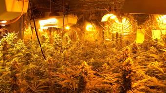 Indoor-Hanfplantage. (Symbolbild)