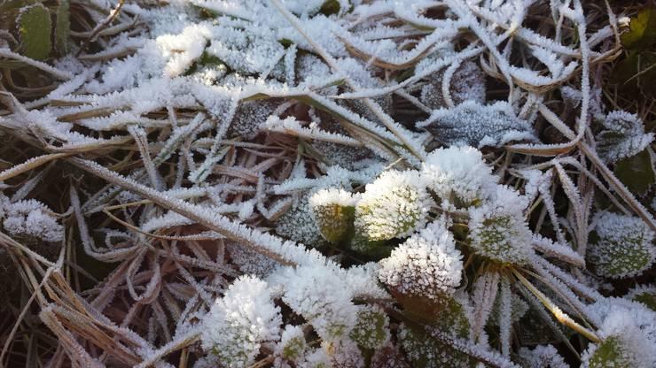 Wunderschön: Eiskristalle auf Gräsern werden von der Sonne beleuchtet.
