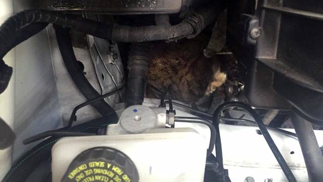 Polizei rettet Katze