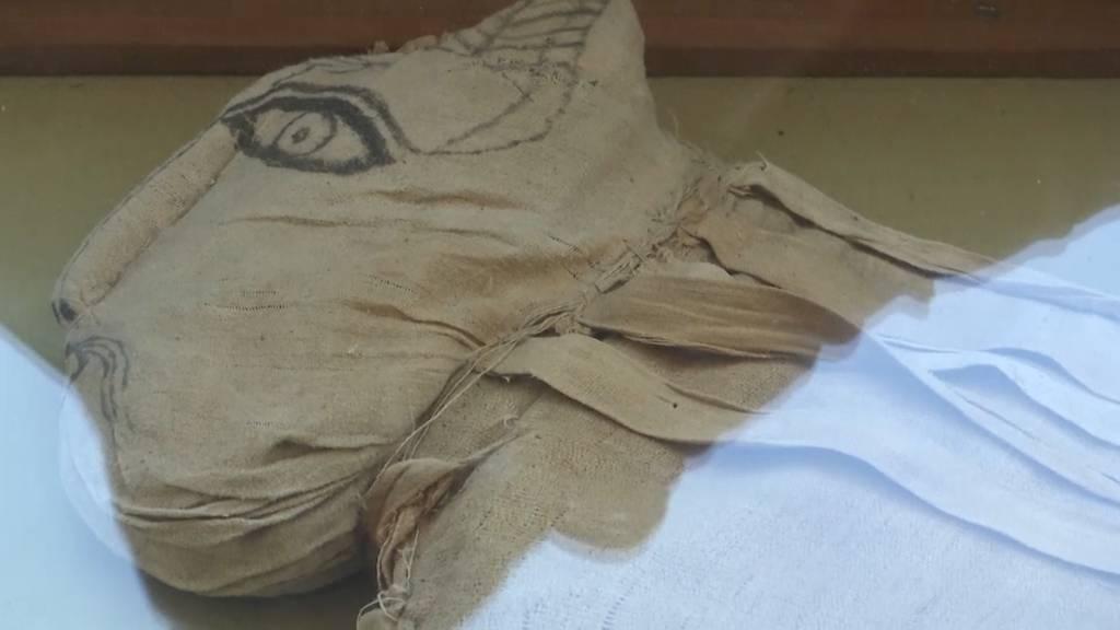 Welches Tier steckt in dieser Mumie?