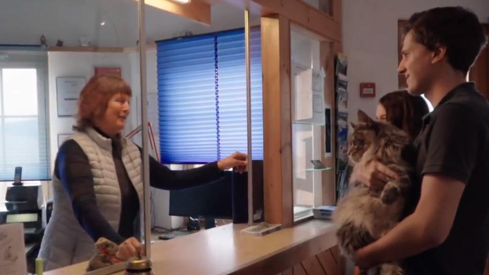 Einchecken mit der Katze - Bündner Hotels sollen vermehrt Haustiere aufnehmen.