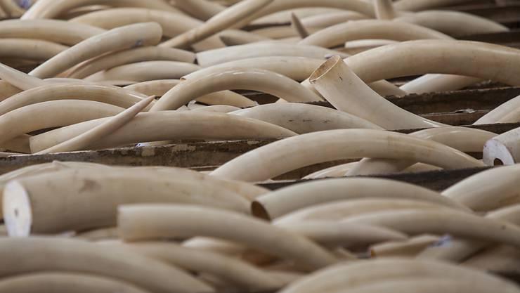 Bei Durchsuchungen in sechs Provinzen haben chinesische Behörden insgesamt 2748 Elefanten-Stosszähne sichergestellt.(Archivbild)