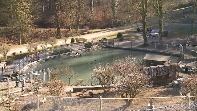 Tierpark Bad Zurzach vor ungewisser Zukunft