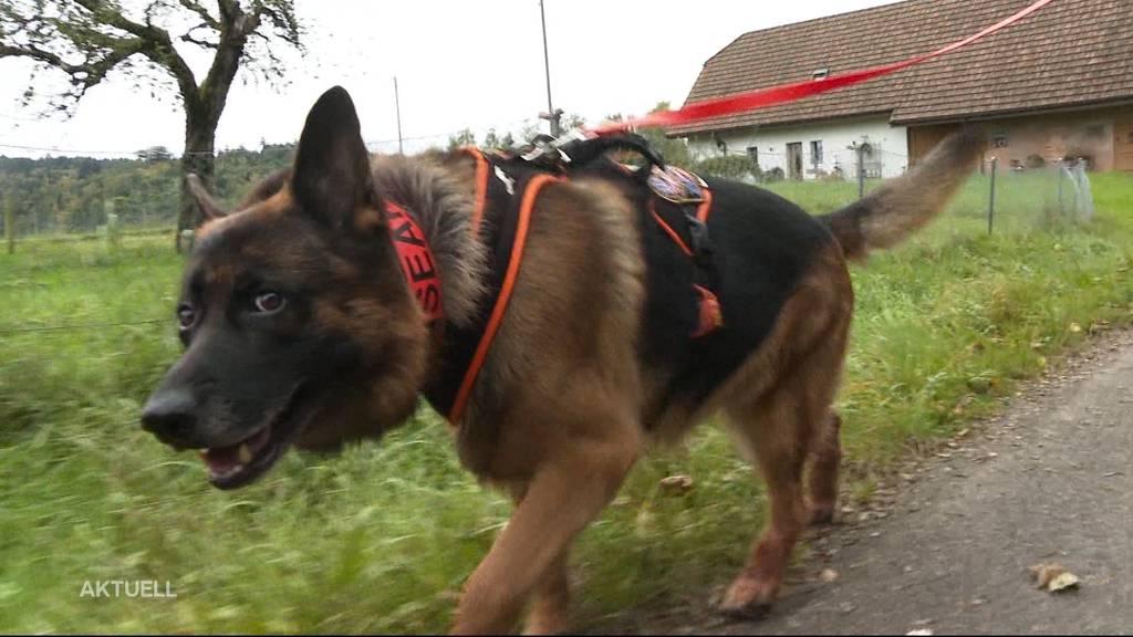 Vermissten erschnüffelt: So erlebte die Hundeführerin die Suche nach dem 94-Jährigen