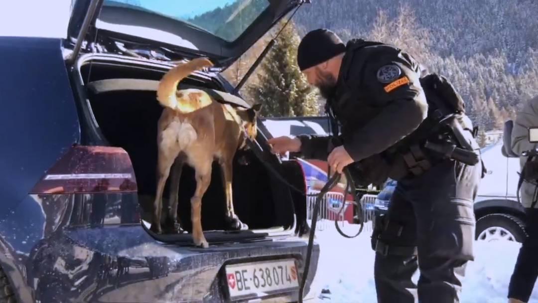 Ein Sprengstoffspürhund  im Einsatz