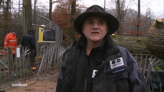 Burglind beschädigt Tierpark Dählhölzli