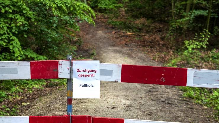 Abgestorbene Bäume im Hardwald können abbrechen und Passanten verletzen. Deshalb ist der Zugang nicht mehr erlaubt.