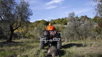 Ein Jäger führt seine erlegte Wildsau ab – in Castell'Azzara in der Toskana im vergangenen Herbst.Max Rossi/Reuters