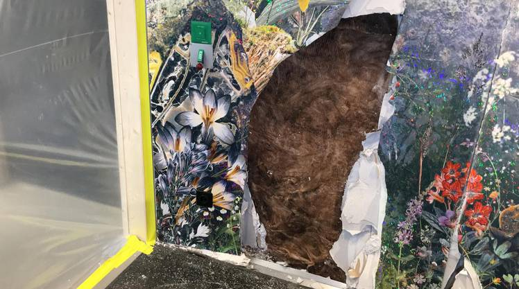 Die beschädigte Tapete im Frühstücksraum.