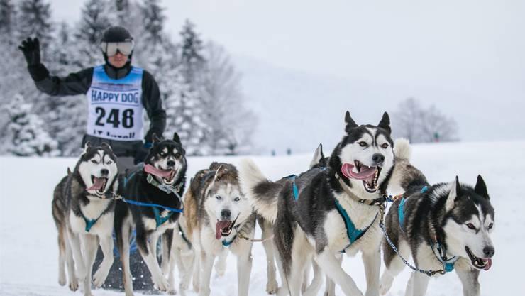 Andy Matsch mit sechs seiner Hunde.