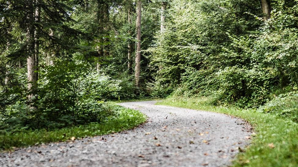 Neuer Waldparcours verbindet Kunst und Sport