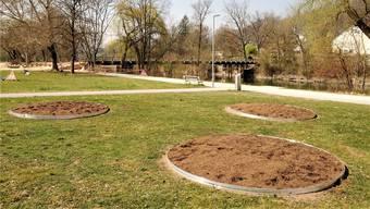 An vier Orten sind spezielle Blumenrabatten fürs «Eidgenössische» vorbereitet worden. Das Bild zeigt jene am Albert-Einstein-Weg, hinten die Turnfest-Behelfsbrücke. uw