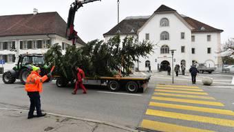 Holzfluhverein Balsthal stellt Weihnachtsbaum auf Kornhausplatz auf
