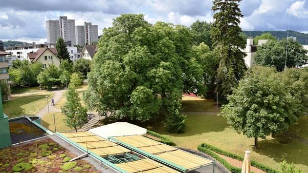 Die Gruppe mit dem riesigen, bei Süssbach-Bewohnerinnen und Bewohnern beliebten Kastanienbaum muss Akkord weichen – die Bauprofile zeigen, wie gross das zukunftsträchtige Projekt ist.