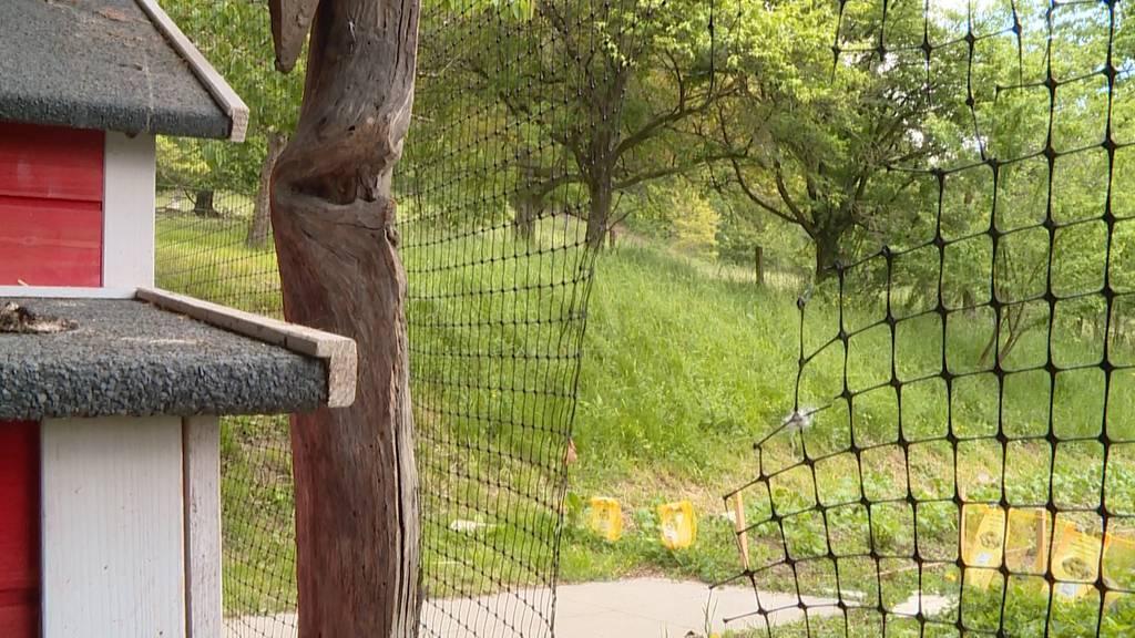 Unterengstringen: Hühner-Diebstahl schockiert Bewohner der Seniorenresidenz