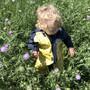 Klein Mateo in der Blumenwiese