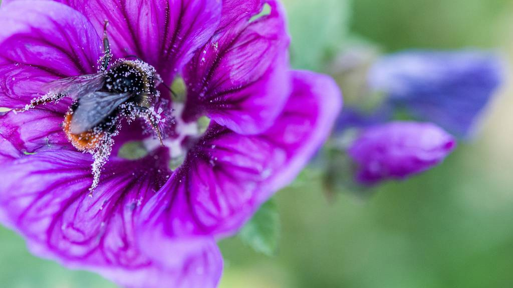 Politik soll Insektensterben erforschen