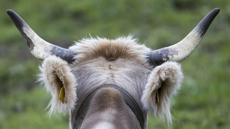 Dieses Jahr im Ausland von Interesse für die Medien: Kuhhörner und die Diskussion über die Hornkuh-Initiative. (Archivbild)