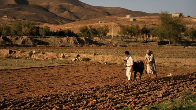 Jemenitische Männer pflügen mit Hilfe eines Esels ein Feld