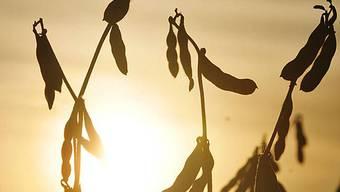 Soja-Anbau gefährdet die Wälder Argentiniens (Archivbild)