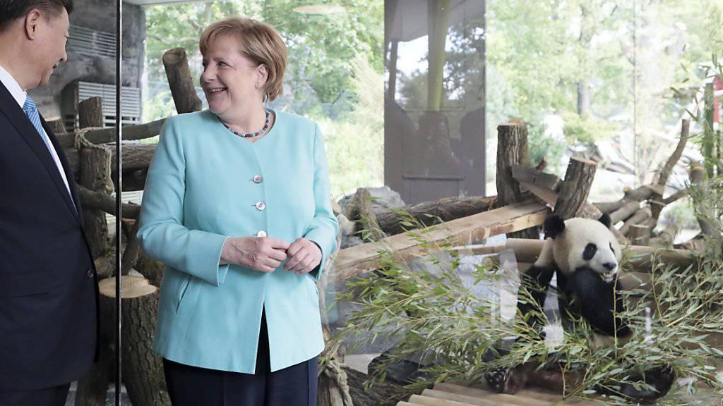 Im Zeichen deutsch-chinesischer Diplomatie haben die deutsche Kanzlerin Angela Merkel und Chinas Präsident Xi Jinping im Berliner Zoo die Anlage für zwei Riesenpandas eröffnet.