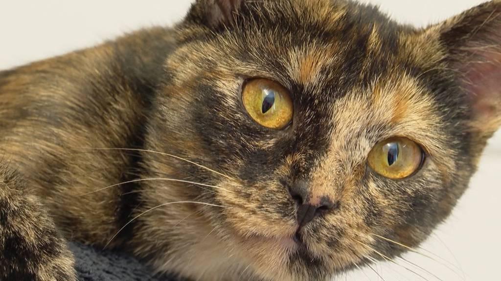 Boom bei den Tiervermittlungen und Flaute in den Tierpensionen