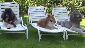 Weil für ihre vierbeinigen Gefährten der 1. August der blanke Horror ist, müssen etliche Hundehalter ins Ausland feiern gehen.