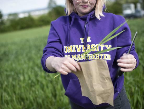 Lauryn McLoughlin von der University of Manchester nimmt Bodenproben eines Detektors zur Messung der Lachgasmenge.
