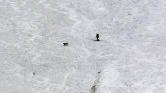 Ein Retter überquert mit seinem Suchhund einen Lawinenhang (Archiv)