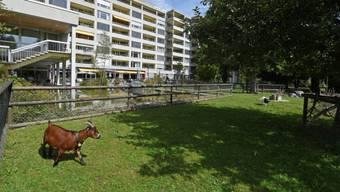 Die Stadt Winterthur hat im Alterszentrum Adlergarten eine Covid-19-Abteilung geschaffen. Dort werden auch infizierte Seniorinnen und Senioren gepflegt, die nicht in ein Spital verlegt werden wollen.