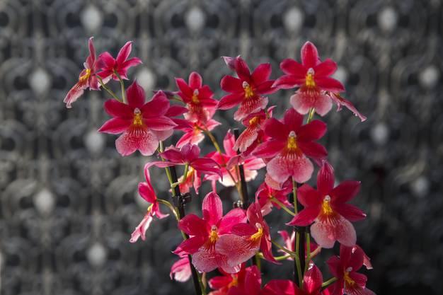 Orchideen-Ausstellung im Blumen Wyss in Zuchwil.