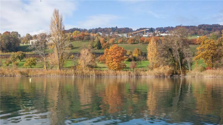 Der LSVH kämpft für eine möglichst naturnahe Hallwilersee-Landschaft.