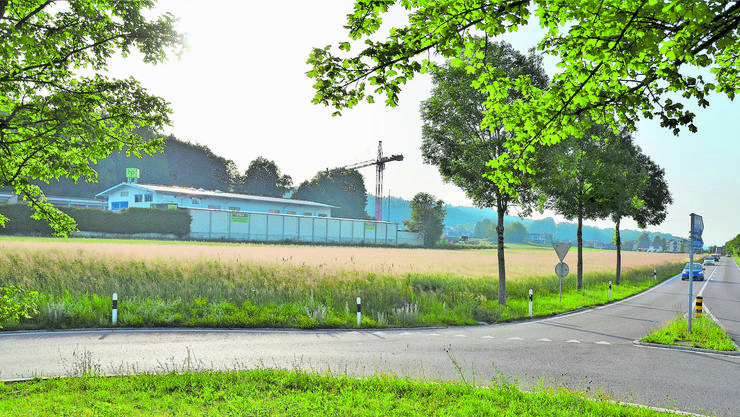 Hier entsteht das riesige Gebäude der Taracell AG. Doch nur wenn die Niederwiler an der Urne Ja sagen.