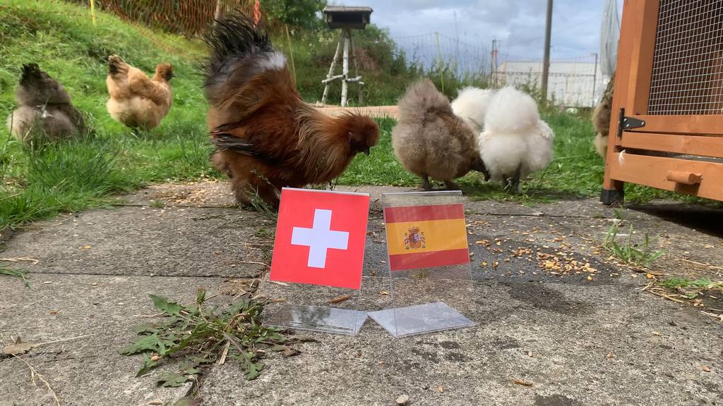 Orakel-Henne: So geht das Viertelfinal-Spiel für die Schweiz aus