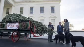 US-First-Lady Michelle Obama nimmt den offiziellen Weihnachtsbaum in Empfang.