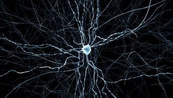 Erstmals veröffentlichen Forscher eine Simulation eines Stück Gehirns. Die abgebildete virtuelle Hirnzelle ist eine sogenannte Korbzelle. (Foto: Handout)