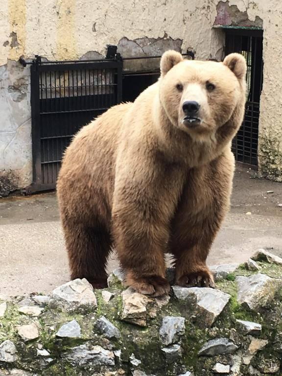 Erster Bewohner des Bärenlands (© zVg)